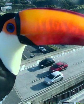 Câmera de tráfego flagra tucano (mais uma vez) na Via Anhanguera