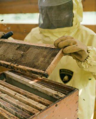 Saiba porque a Lamborghini mantém um apiário com mais de 600.000 abelhas
