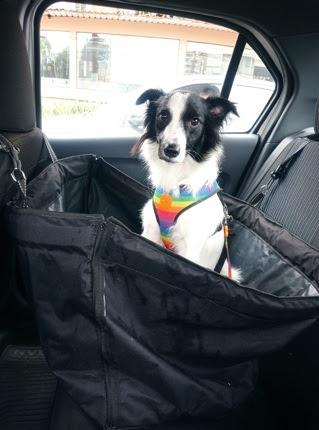 Saiba como transportar o pet no carro de maneira segura (e sem multa)